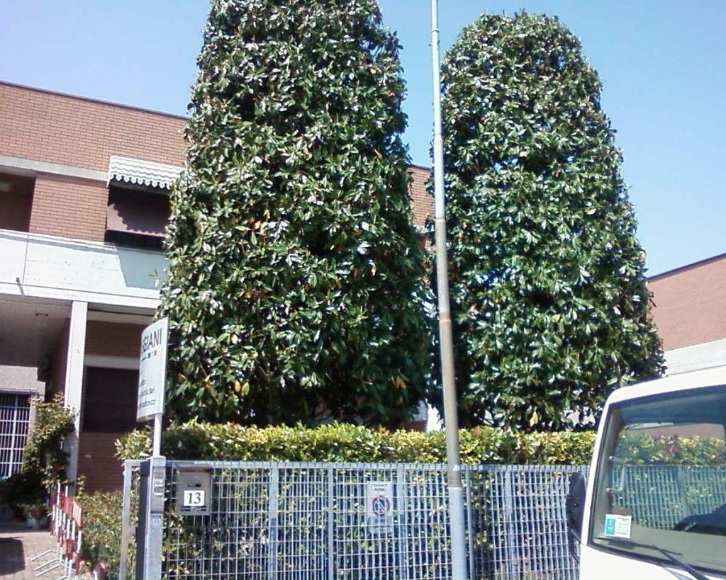 potatura-siepi-alberi-1-1024x819