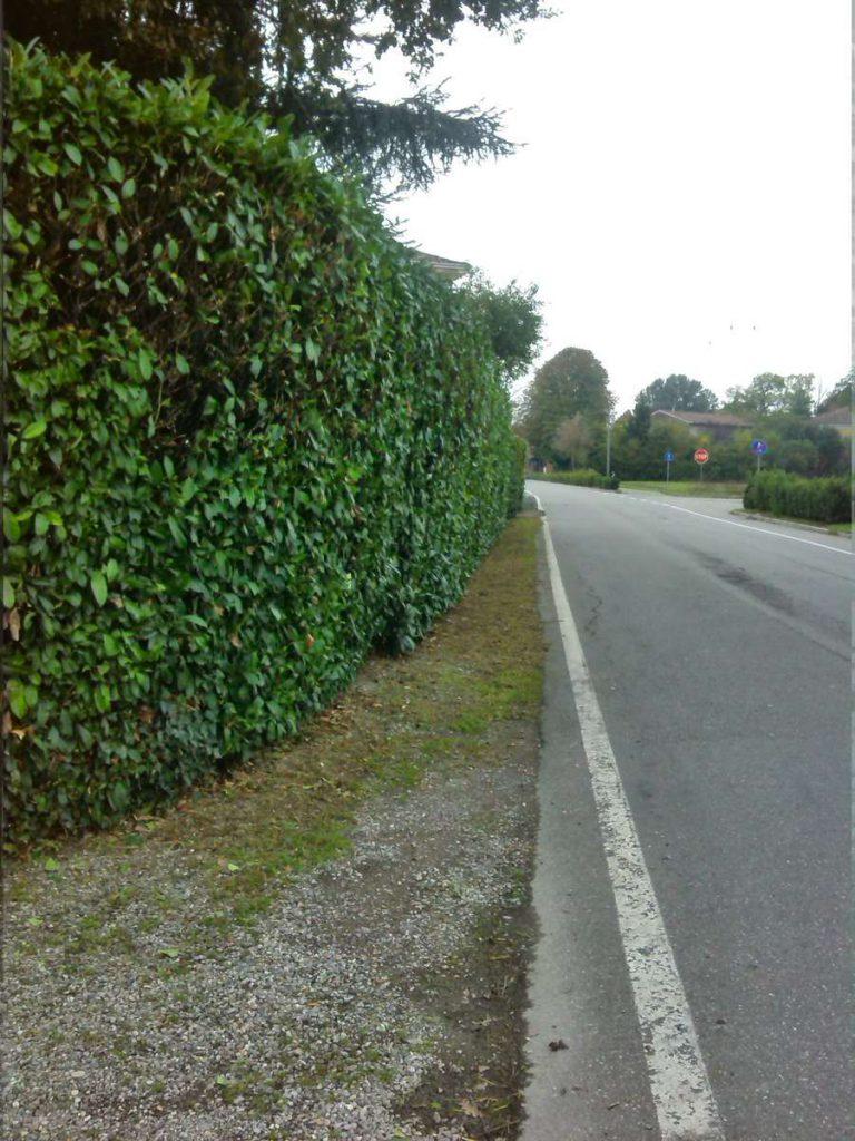 potatura-siepi-alberi-14-768x1024