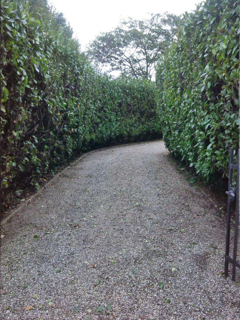 potatura-siepi-alberi-15-768x1024