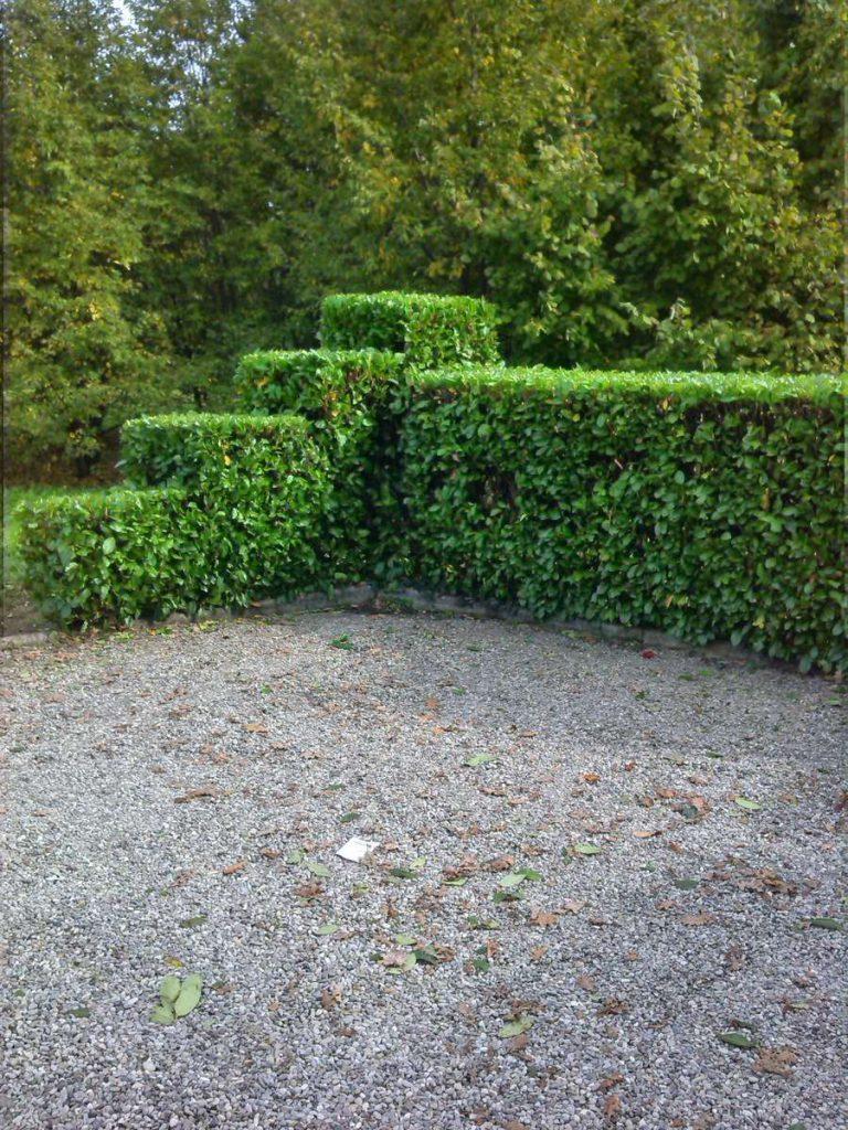 potatura-siepi-alberi-17-768x1024