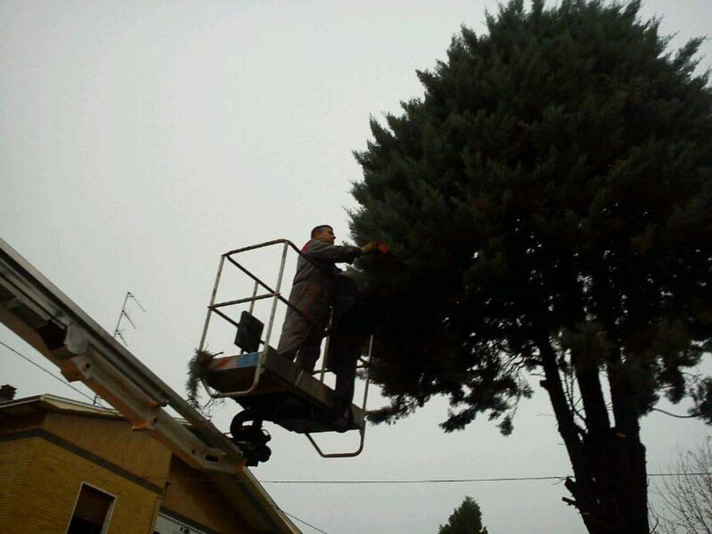 potatura-siepi-alberi-18-1024x768