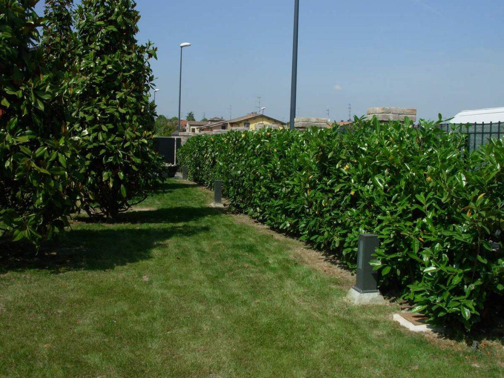 potatura-siepi-alberi-19-1024x768