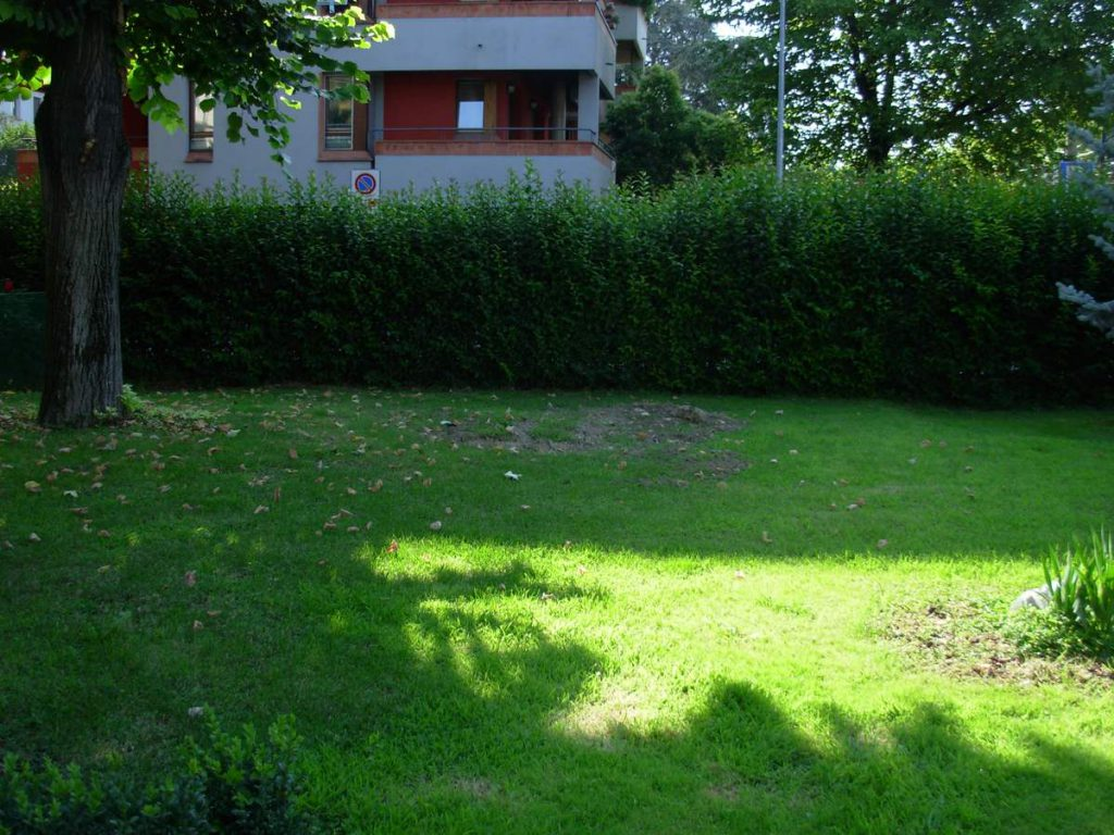 potatura-siepi-alberi-2-1024x768