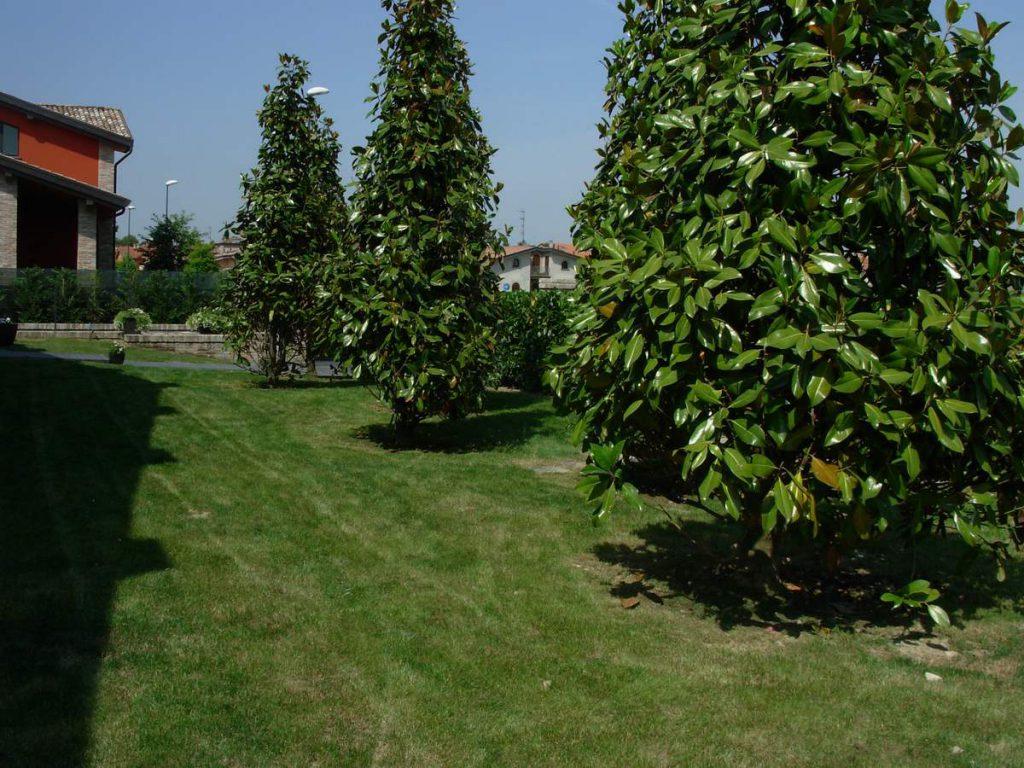 potatura-siepi-alberi-20-1024x768