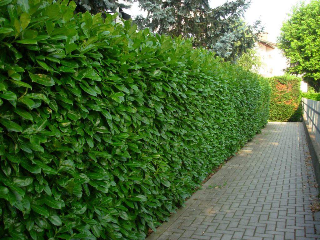 potatura-siepi-alberi-4-1024x768