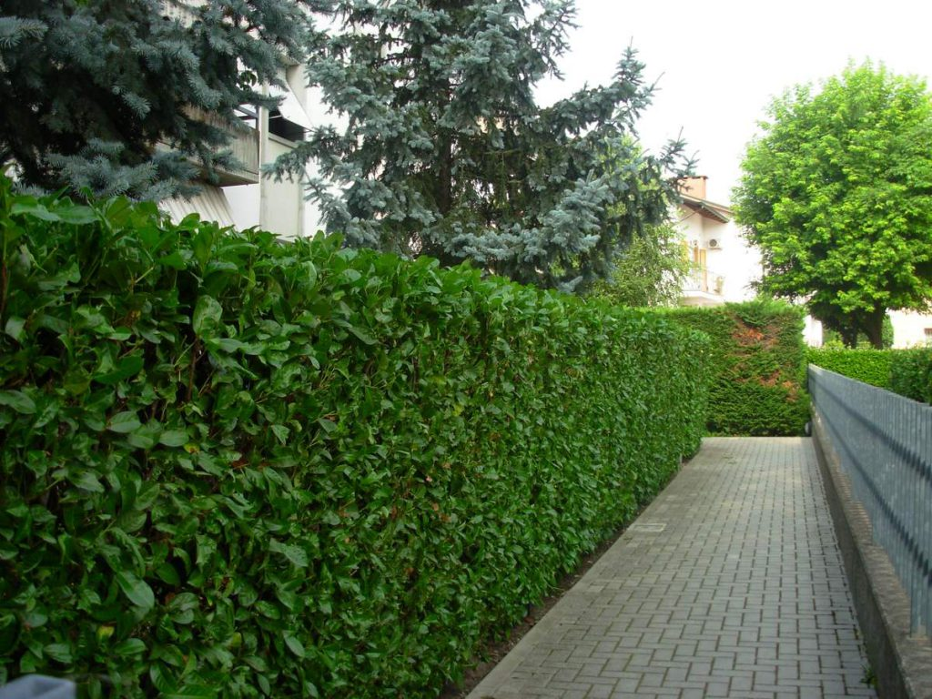 potatura-siepi-alberi-5-1024x768