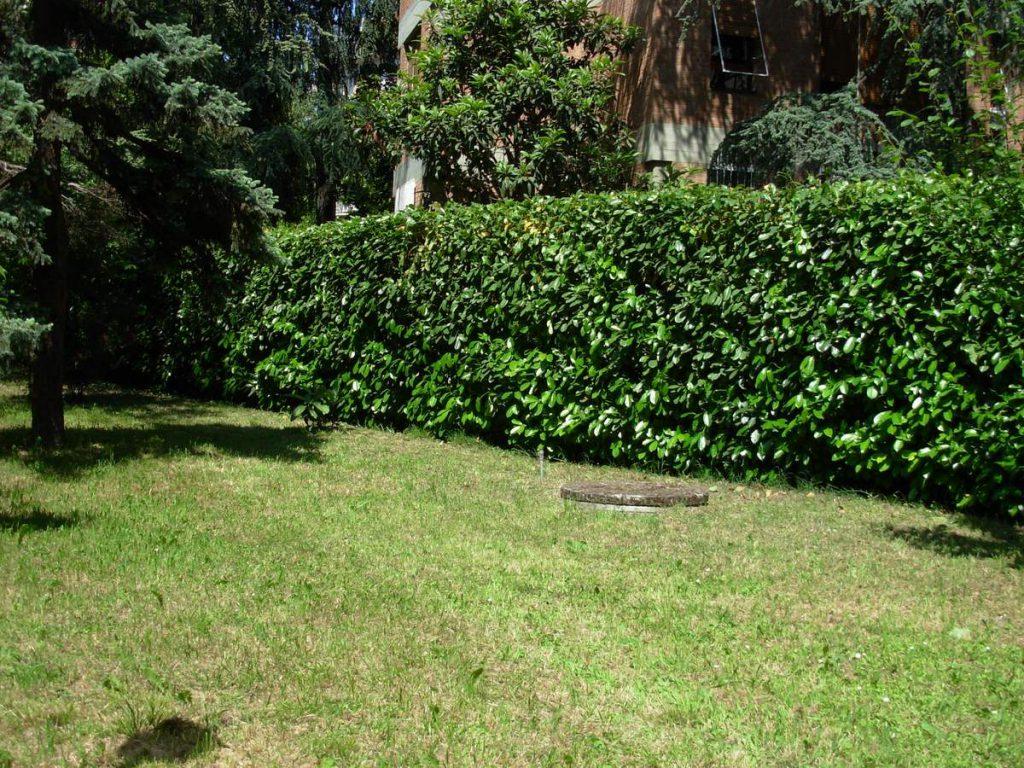 potatura-siepi-alberi-7-1024x768