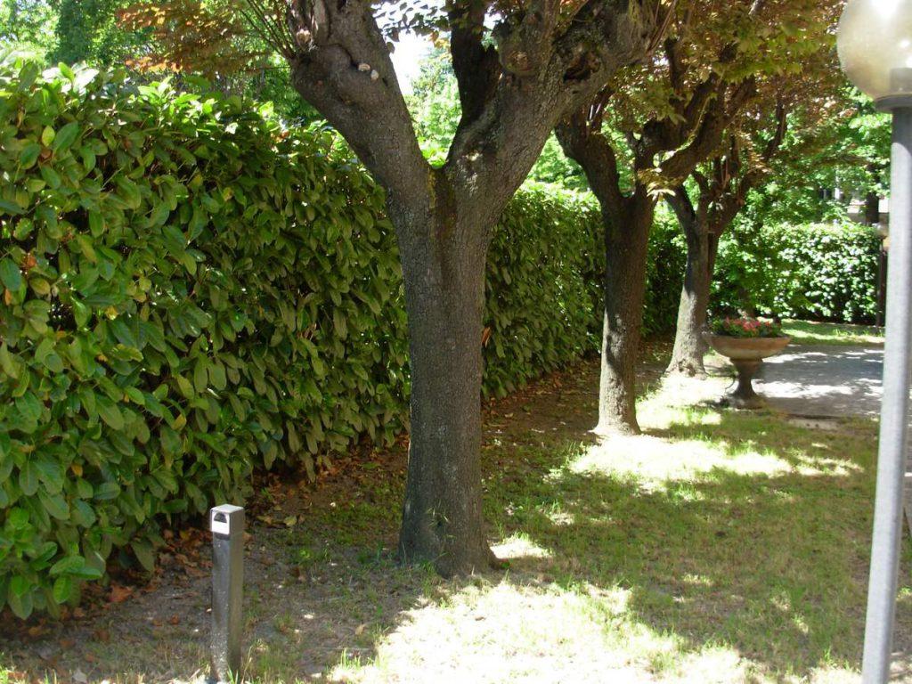 potatura-siepi-alberi-8-1024x768