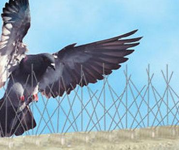prevenzione uccelli animali