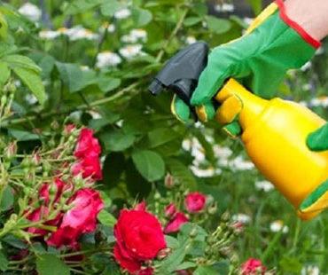 trattamenti fitosanitari