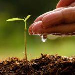 Giardino: Lavori del mese di luglio
