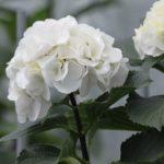 Giardino: Lavori del mese di settembre