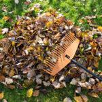Giardinaggio in autunno
