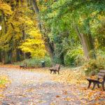 Lavori del mese giardino ottobre